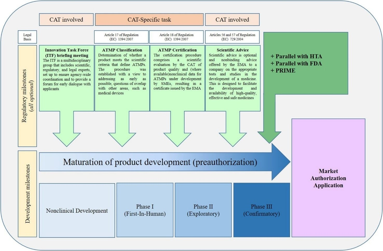 Non-clinical and Clinical Development for ATMPs